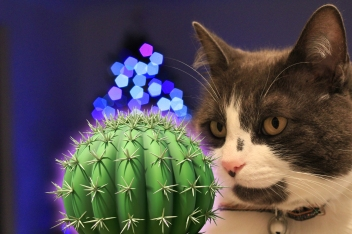 Pretty cat looking at cactus