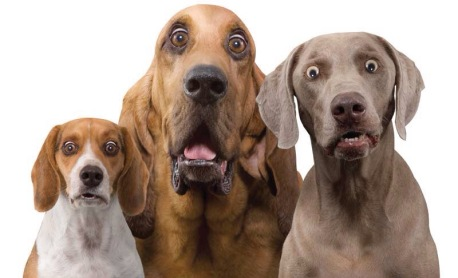 Dogs with surprised expressions on their faces