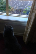 cat looking at birds on window sill